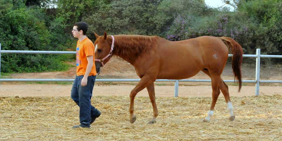 התערבות טיפולית למשפחות נפגעות אלימות בעזרת בעלי חיים – חלק ב