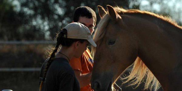 """""""עתיד בטוח""""- התכנית להעצמה והכשרה מקצועית של בני נוער בעזרת כלבים וסוסים"""