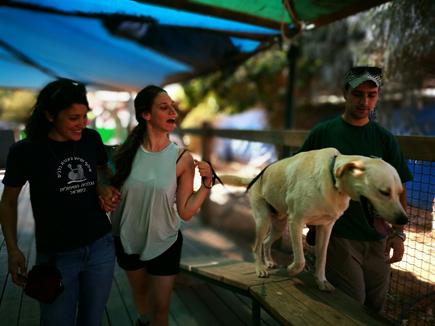 השילוב של כלבנות טיפולית וליצנות רפואית
