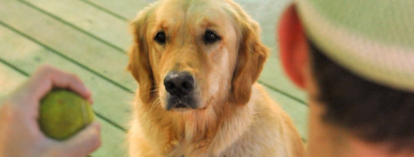 ההבדל בין הכלב הטיפולי לכלב הבית