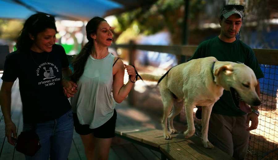 כלבנות טיפולית- סיפורי הצלחה של מדריכים