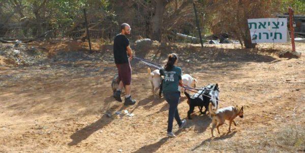 אילמות סלקטיבית וכלבנות טיפולית