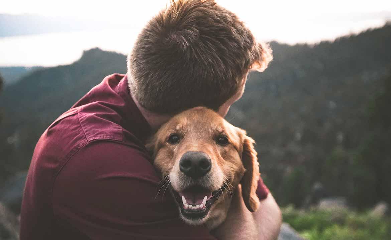 תחושת הרחמים בקרב מטפלים באמצעות בעלי חיים