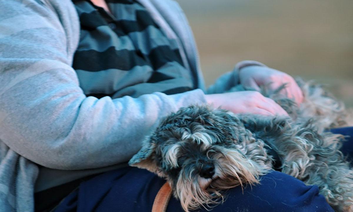 הכלב הטיפולי – חברו הטוב ביותר של המטופל